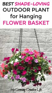 DIY Shade-Loving Outdoor Plant for Flower Hanging Basket