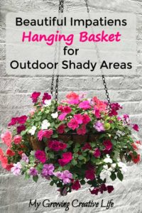 Impatiens Hanging Basket for Outdoor Shady Areas